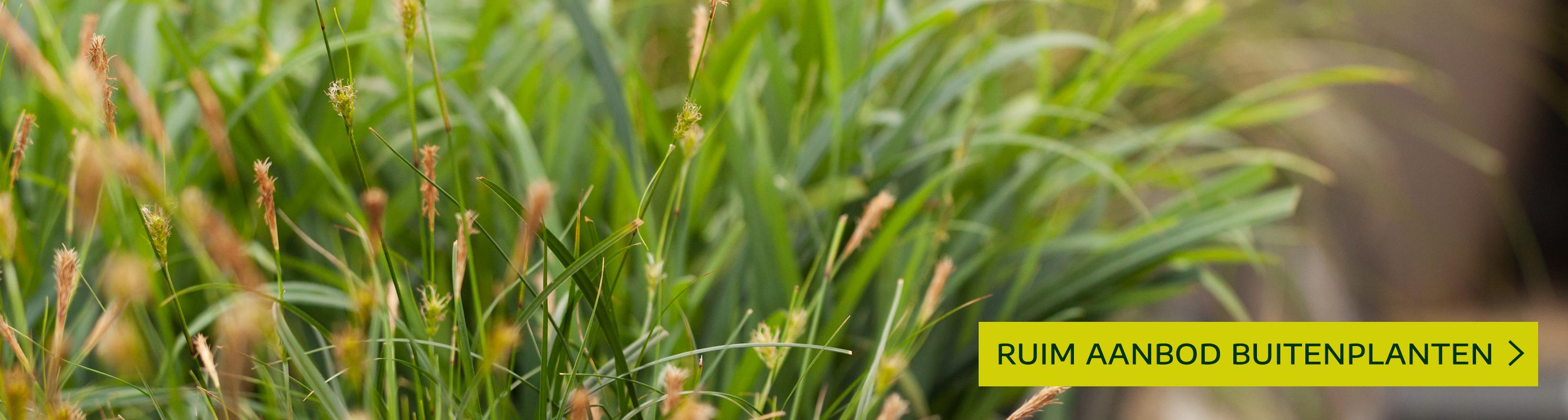 Artikelaanbod buitenplanten leuven mechelen heist-op-den-berg tuincentrum thiels