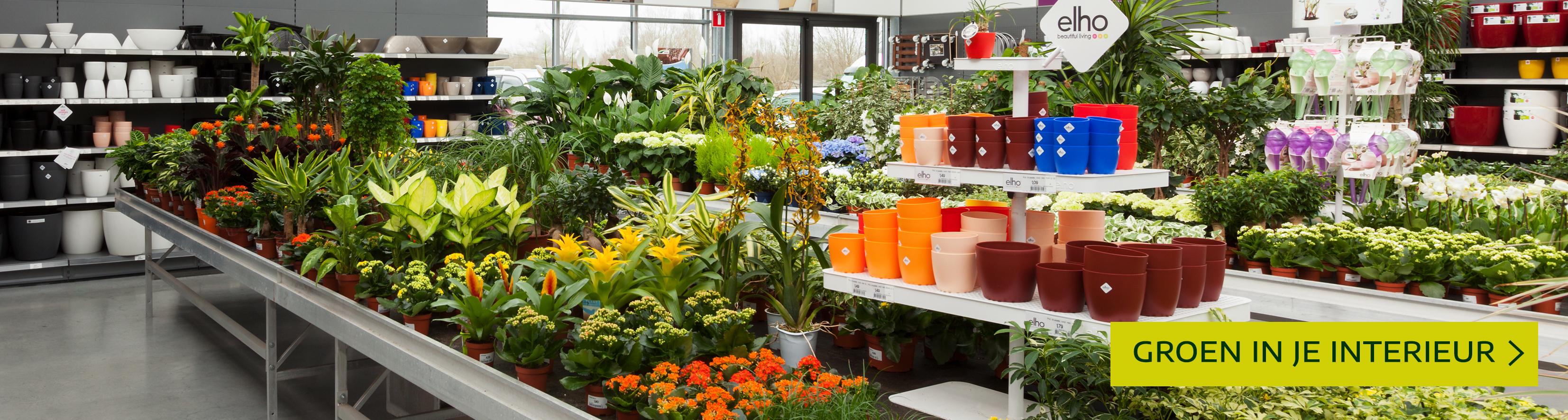 Artikelaanbod kamerplanten leuven mechelen heist-op-den-berg tuincentrum thiels