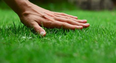 Bescherming gazon tuincentrum thiels heist-op-den-berg