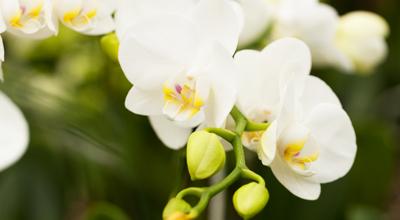 Bloeiende kamerplanten tuincentrum thiels heist-op-den-berg leuven mechelen
