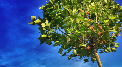 Bomen, heesters & coniferen tuincentrum thiels heist-op-den-berg leuven mechelen