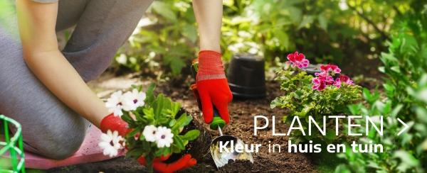 aanbod Planten