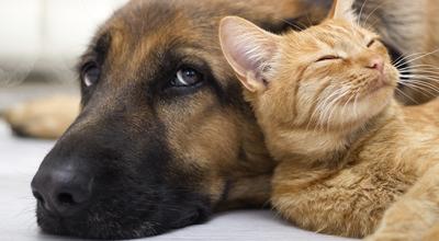 Honden en katten bestrijding thiels heist-op-den-berg leuven mechelen