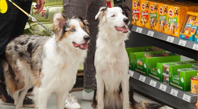 Honden tuincentrum thiels heist-op-den-berg leuven mechelen