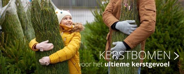 Kerstbomen - Thiels