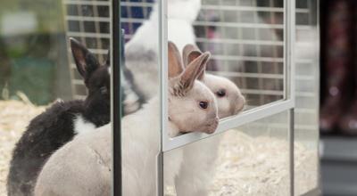 Konijn knaagdieren tuincentrum thiels heist-op-den-berg dierenwinkel