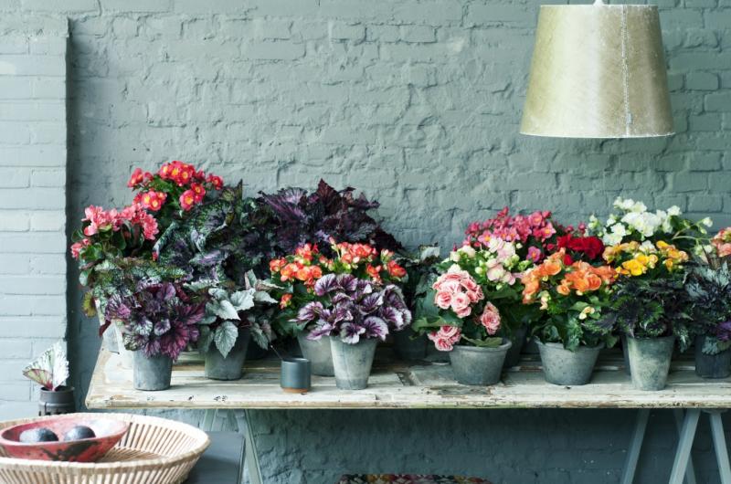 Mooie binnen- en buitenplanten koopt u bij tuincentrum Thiels!