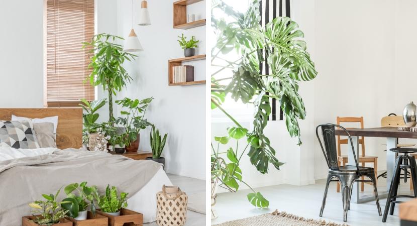 Groene kamerplanten voor slaapkamer en woonkamer