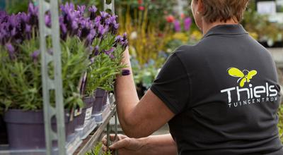 Vaste planten tuincentrum thiels heist-op-den-berg leuven mechelen