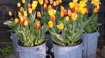 Zinken potten tuincentrum thiels heist-op-den-berg dierenwinkel