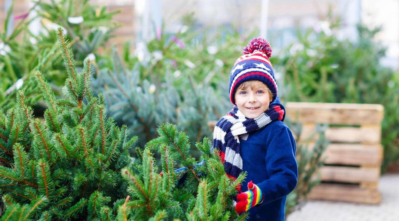 Echte kerstboom kopen - Thiels